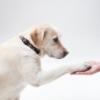 動物関連の任意団体・ボランティア団体設立サポート
