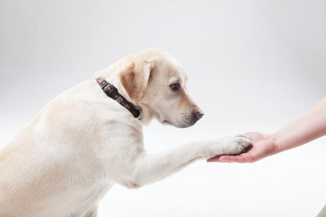 ペット関連の非営利団体・ボランティア団体設立サポート