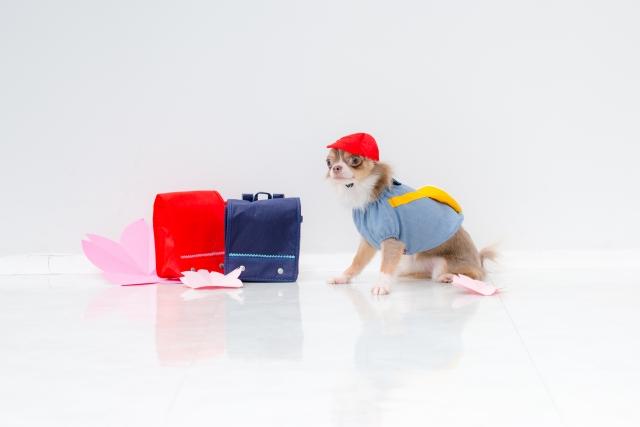 犬の訓練所・しつけ教室・幼稚園開業サポート