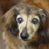ペットの訪問介護サービス開業サポート