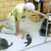 動物関連の非営利団体・NPO法人設立サポート
