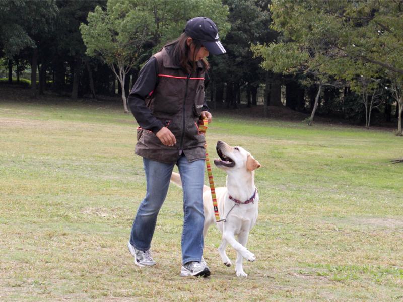 犬の出張(訪問)訓練士・ドッグトレーナー開業サポート