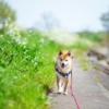 ペットシッター・犬のお散歩代行サービス開業サポート
