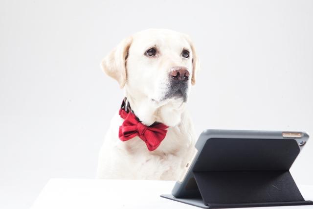 ペットの仲介販売・ネット販売開業サポート