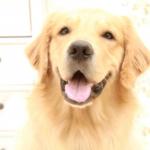 第一種動物取扱業・登録申請手続き
