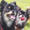 第一種動物取扱業の登録要件について