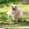 犬・猫ブリーダーの収支計算例