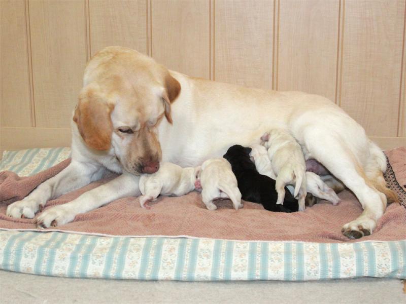 第一種動物取扱業者の遵守基準の明確化