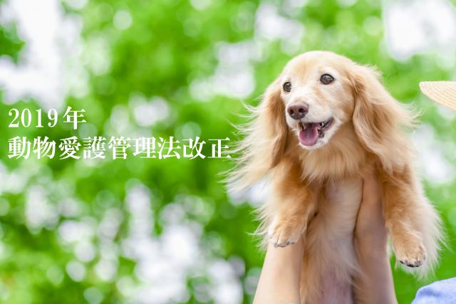 2019年動物の愛護及び管理に関する法律改正について