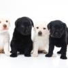 第一種低層住居専用地域内での動物取扱業開業について