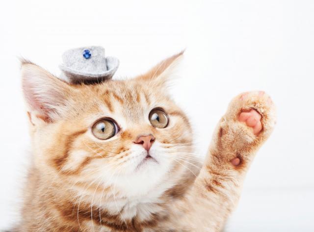 猫ブリーダー等、猫のみ取扱う場合の動物取扱責任者の資格要件について