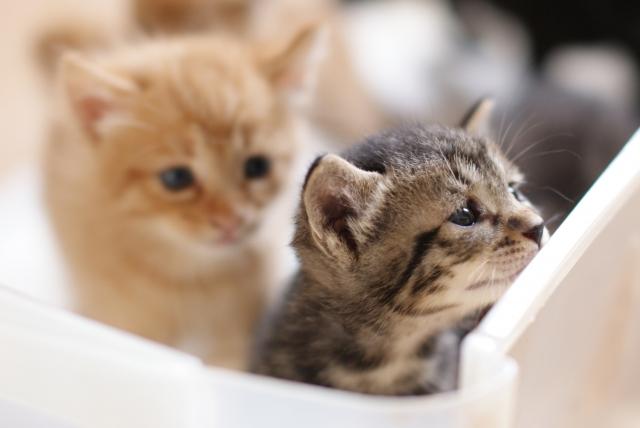 第二種低層住居専用地域内での動物取扱業開業について