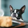 食品衛生法に基づく営業許可申請|飲食店・喫茶店併設