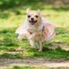 副業ブリーダーの収支計算例 犬・猫のブリーダー