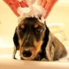 ペットの訪問(出張)美容サービス開業サポート