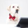 ペット(犬猫)仲介販売・ネット販売開業サポート